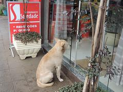 I want some food! (Mauricio Portelinha) Tags: dog restaurant ristorante restauracja  restoran restaurang  restaurace   soledade ivaipor   restaurantesoledade