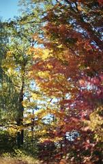 (°para) Tags: park toronto film nikon nikonfm2 fm2 colornegative fall2013