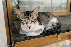714-Mya-PATHEIN-110.jpg (stefan m. prager) Tags: cat southeastasia burma myanmar katze birma katzen mieze pathein sudostasien