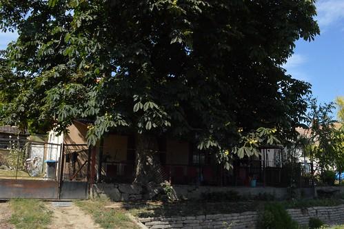 2015_Igar-Vám_0333