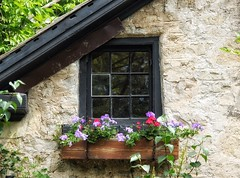 49/ windows & doors ~the sequel~ (s@ssyl@ssy) Tags: flowers ontario 50mm elora windowbox drivebyshooting windowpanes hww vintagehome canon600d windowwednesdays