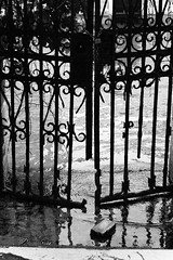 Waterworld (S. Hemiolia) Tags: old venice blackandwhite bw abandoned zeiss vintage lens gate time zoom decay venezia manualfocus f4 biancoenero cancello verlassen vecchio 80200 sonnar vario abbandonato variosonnar