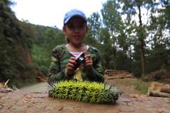 Gusanito (Mary Torres E.) Tags: gusanito sanantonio prado medellín colombia marytorres