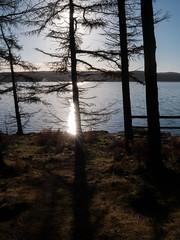 Kielder back-light_1000870 (HJSP82) Tags: 20161127kielder backlight lake reservoir trees contrejoure