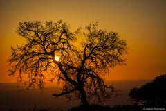 Siluetas del Becerrero (jesbert) Tags: siluetas siluets backlight contraluz contraste contrast sunset atardecer arbol tree sun shadow sombra