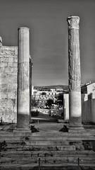 Watchdogs (thrbnzzyzx) Tags: athen athens dog dogs hunde ruine säulen ruin greece schwarzweis blackandwhite griechenland nikon snapseed holydays urlaub