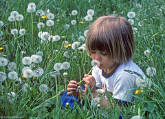Dandelion Daydreams (Electric Crayon) Tags: boy plant flower nature field outdoors weed child kodak dandelion seedhead lionstooth patrickmcmanus electriccrayon