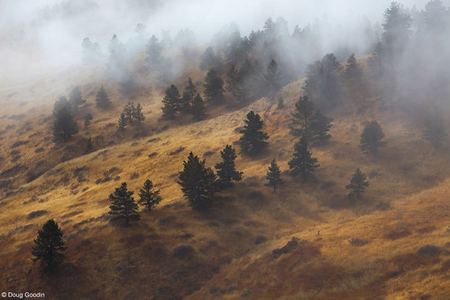 Photo - Mist and pines on the slopes of the Front Range.