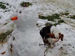 La vergenza del artista (Ru GarFer) Tags: nieve perro spaniel mueco bizkaia vizcaya vergenza epagneul ermua bretn