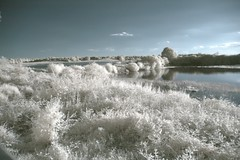 IMGP7783 A Brenne pond - infrared