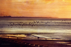 diorama (silviaON) Tags: sunset beach birds october norderney textured 2013 soulscapes memoriesbook bsactions oracope magicunicornverybest crisbuscaglialenz top2013