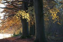 (Moser's Maroon) Tags: autumn herfst harmelen vleuten vijverbos