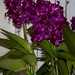 Cattleya Tristar Bouquet – Anita Spencer