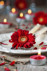 Romantic dinner (Oxana Denezhkina) Tags: wedding red two food holiday flower love dinner table lunch restaurant day symbol anniversary decoration knife marriage plate fork valentine romance celebration invitation card gift gerbera meal dating passion valentines romantic dinning banquet date elegant setting