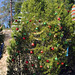 Trees_of_Loop_360_2013_186