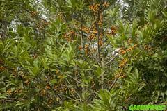 GP04V39 (Greenpeace International) Tags: trees nationalparks biodiversity forestscampaigntitle foreststopography