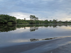 Cuybeno Lagoon Amazon Basin (globaltrekkers.ca) Tags: ecuador anaconda amazonbasin cuyabenorainforest