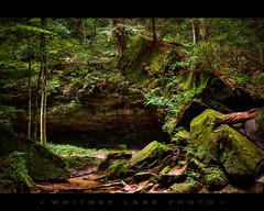 Summertime on Trail 3 (Whitney Lake) Tags: plants moss sandstone indiana ferns turkeyrun