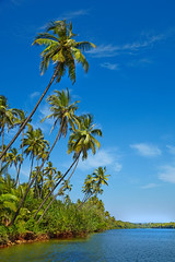 Tropical landscape with palm tree. GOA, Chapora River (Olena_Istomina) Tags: travel blue sea summer sky cloud india seascape tree nature water river islands bay landscapes leaf view coconut turquoise goa wave scene lagoon palm resort journey jungle edge beaches tropical coastline relaxation vacations climate equator locations chapora