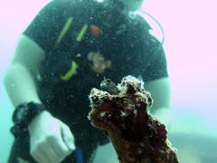 IMG_9187 (milewski) Tags: ocean me water underwater salt scuba diving rob scubadiving diver saltwater underwaterphotography scubadiver oceanphotography
