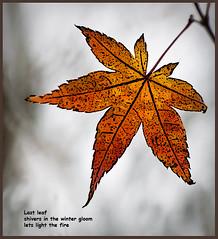 Last leaf (Wanda Amos@Old Bar) Tags: haiku poetryandpicturesinternational wandaamos