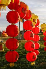 Chinese Lantern Festival-8 (writingfroggie) Tags: china chinese festivals lantern fountainhills chineselanternfestival chinachineselanternfestivalfestivalsfountainhills