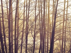 1886 Foggy (Nebojsa Mladjenovic) Tags: winter light mist france tree art nature monochrome fog sepia digital forest dark french outdoors lumix frankreich burgundy hiver foggy panasonic frankrijk bourgogne francia arbre zima priroda morvan francais fz50 drvo yonne svetlost mladjenovic