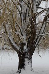 Snow-8023