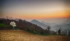 Tramonto sui Colli Euganei (tampurio) Tags: sunset sky panorama sun sunlight tree clouds sunrise landscape tramonto sony cielo tramonti sole paesaggi paesaggio colline collina padova collieuganei colli slta58