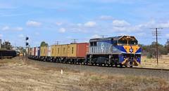 VL353 rolling solo on the QUBE container freight at Murtoa (bukk05) Tags: railroad station train wheat tracks rail railway loco australia melbourne victoria container locomotive horsham vr pn wagons horsepower gclass qube vline pacificnational standardgauge wift wimmera g540 rp3 victorianrailway cfcla murtoa railpage chicagofreightcarleasingaustralia g519 dooen vlclass g537 emd16645e3c vl353 qubelogistics marmalake comiccourt rpauvlclass railpage:class=65 railpage:loco=vl353 rpauvlclassvl353 westernstandardgaugeline wimmeracontainerline avteqmelbourne