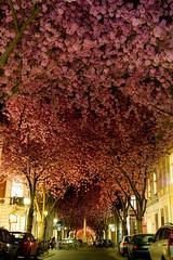 Улица в Бонне, Германия