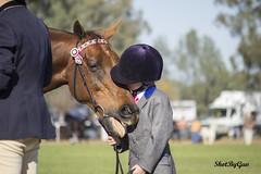 IMG_4498 (gavinglis) Tags: horses horse hack equestrian hacking equine horseandrider