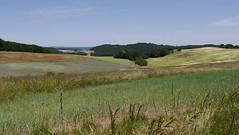 idyll of Germany (Mr.Zenma) Tags: wood summer field grass landscape silent outdoor sommer grain pflanze feld felder gras idyll landschaft wald korn idylle lanschaft stille ebene grasland nordpfalz