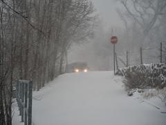 Tempête Hivernale / Winter Storm (Mad Blike) Tags: hasselblad hasselbladx1d hasselbladxcd90mmf32 tempête tempêtedeneige storm snowstorm snowfall neige snow blizzard vent wind paysage snowscape visibilité visibility