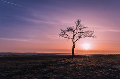Tree in sunrise. (Markus1224) Tags: baum tree schwäbische alb swabian albstadt zollernalbkreis gegenlicht backlight nikon d5500 raw sonnenaufgang sunrise germany badenwürttemberg spring