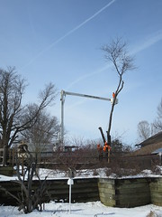 Locust Tree coming down (Audubon Community Nature Center) Tags: tree close building septic system great lakes service outdoor signs grounds maintenance locust bucket truck
