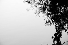 Untitled (man_ingreen) Tags: abstract astratto riflesso reflection natura nature acqua water fiume river alberi trees rami branches biancoenero blackwhite bn