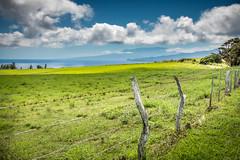 Hill of Stars (helenehoffman) Tags: ocean sea hillofstars farm ranch hawaii puuohoku molokai
