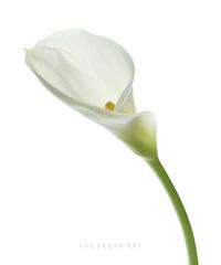 카라2.Kara . . .  너의 그 미소 난 이미 유혹되고 말았다   ㅡㅡㅡ #선물 #꽃 #기억 #미소 #유혹 #사진작가이정휘  #flower #kara #memory  #temptation #smille  #gift #Nikon #korea  ㅡㅡㅡ http://facebook.com/LEEJHPHOTO Korea CopyRight. 2017. LEE,JEUNGHUI All Rights Reserved. All Pictures cannot be co (artlens64) Tags: 선물 꽃 기억 미소 유혹 사진작가이정휘 flower kara memory temptation smille gift nikon korea