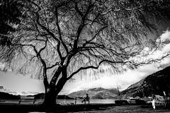 Grounded (explored) (JSTAR377) Tags: selfie tree forest blackandwhite water lake grounded yoga posture treeposture treesdiestandingup beach outdoors
