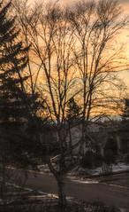 TGIF (Cindy's Here) Tags: tgif sunset tree thunderbay ontario canada canon 157365