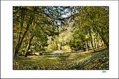 CROXTETH HALL PARK. (DEREK HYAMSON . OVER 5 AND A HALF MILLION) Tags: hdr woods croxtethhallpark liverpool