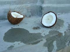 wm47_sydney_11 (WM47) Tags: art beach bondi skyline zoo graffiti coconut sydney australia koala harborbridge amaze beastman streeetart horphe ontre tagspalmtrees