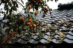 香月杏の壁紙プレビュー