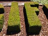 Whatever. You know. Like, as... (misterbigidea) Tags: city urban green landscape bush topiary university gardening decorative letters lawn scenic entrance foliage hedge if letter stockton scupture whatif greenthumb talkingplant