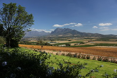 Cape vineyards (cathm2) Tags: travel southafrica wine capetown vineyards