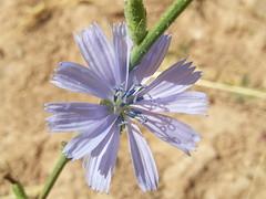 Here again (Mahsa3611) Tags: life flower green nature iran shiraz تابستان ایران mahsa سبز گل شیراز مهسا mahsa3611