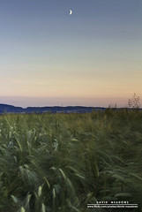 Evening in the Country (DMeadows) Tags: sunset moon field rural landscape evening scotland countryside farm country farming meadow crescent crop crops agriculture glade dumfries galloway arable torthorwald davidmeadows dmeadows davidameadows dameadows