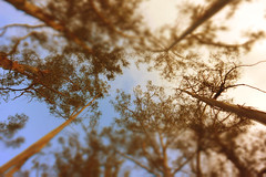 (No me despiertes) Tags: naturaleza rboles bosque cielo