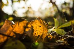 2013-10-31-Herbstfotos-20131031-081943-i082-p0004-SLT-A77V-50_mm-.jpg